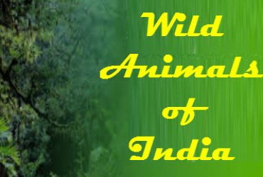The 10 Most Famous Wild Animals of India
