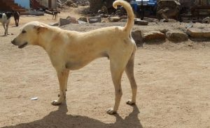 famous dog in india