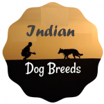 indian dog breeds