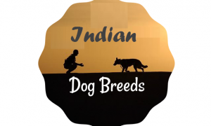 The Best Indian Dog Breeds that Every Indian should know about