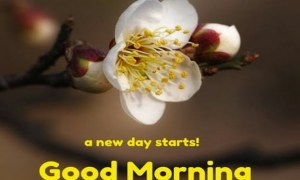 Find Out Here What the Good Morning Image Messages