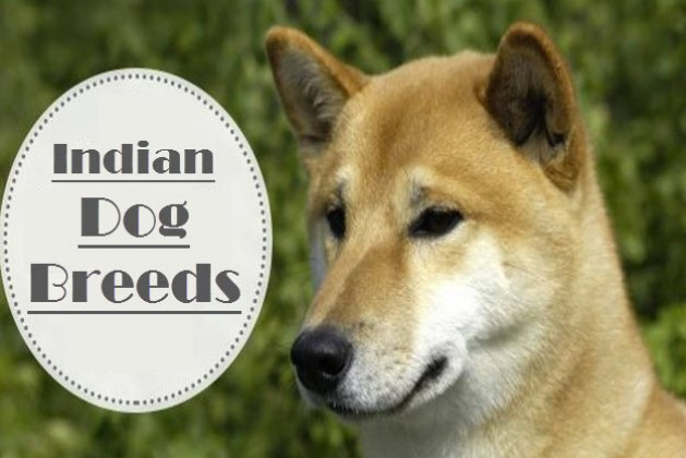 Types of Dog Breed Lists That You Never Knew About